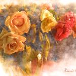 """Anniversary Roses"" by DavidBleakley"