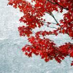 """""""Fall in Germantown"""" by kyuboem"""