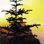 """Sunset conifer"" by james_falconer"