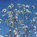 """Magnolia"" by jimblodget"