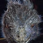 """""""Emu"""" by charlielima"""