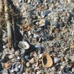 """""""Shells"""" by JoanMariee"""