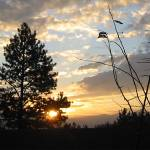 """Oregon Sunrise 10/29/07"" by artistfaye"