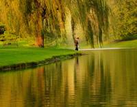 Weeping Willow Tree Nature Landscape Scene