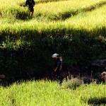 """""""in the field"""" by biroe"""