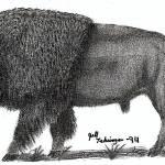 """American Buffalo"" by whitetiger790"
