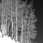 """""""Trees on the snowy bank"""" by brianmacdonald"""