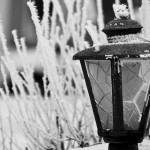 """Frigid Lamp"" by fabfoto"