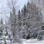 """Winter snow scape"" by PicsbyJanet"