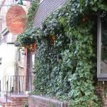 """""""Ivy pub"""" by PicsbyJanet"""