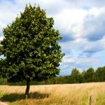 """""""tranquil landscape with one tree as a subject"""" by sweethobbes"""