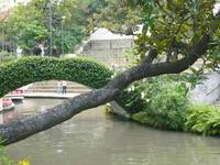 Ivy Bridge & Tree San Antonio