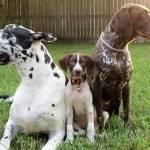 """""""3 dogs"""" by BauerSteman"""