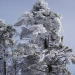 """""""Snowy trees in NH"""" by BauerSteman"""