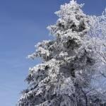 """""""Snowy NH"""" by BauerSteman"""