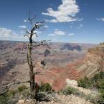 """Surveying the Canyon"" by RaymondPrax"