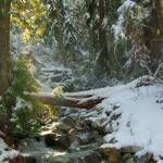 """Stave Creek #1   Cascade Mountains, Washington"" by budo"