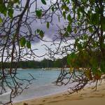 """Barbados Trees and Sand"" by ktcardiogirl"