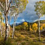 """Aspen Meadow (Panorama)"" by pbk"