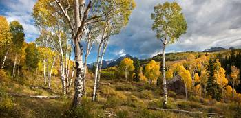 Aspen Meadow (Panorama)