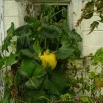 """""""Pumpkin Window"""" by VTDarkStar"""