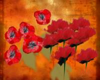 Poppies Oil