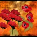 """Poppies"" by allysonricketts"