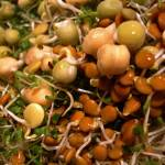 """Sprouts"" by LyndaLehmann"