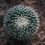 """""""Plante cactus"""" by VinceFarmer"""