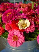 Pink and Red Flowers 792