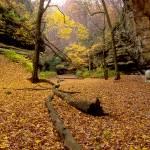 """""""Fall season"""" by augis"""