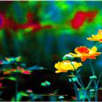 """""""wild flowers"""" by fuxart"""