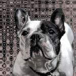 """french bulldog metalic"" by fuxart"