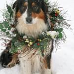 """""""Christmas dog"""" by Susyr22"""