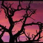 """Moab sillhouette tree"" by ruffleddove"
