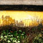 """""""curb shadow weeds"""" by eyecontact"""