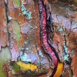 """Wet Bark of Sycamore Tree"" by snarkphoto"