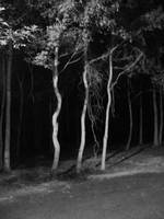 Woods at Night III