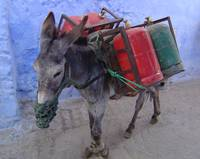 Working Donkey