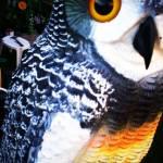"""Owl"" by KaylaElizabeth"