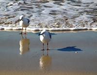 Seaguls take time to reflect