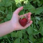 """Berry Pickin"