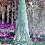 """neon pine.jpg"" by neojacker"
