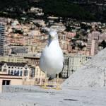 """""""Monaco3"""" by Edith"""