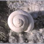 """white snail"" by Lala"