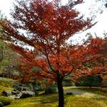 """Red tree, Kyoto"" by supastylinh"