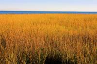 Salt Marsh - Fall Colors