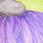 """Purple Cone Flower"" by DebGauthier"