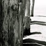 """wood"" by Mokedophoto"