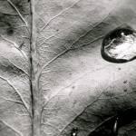 """leaf"" by Mokedophoto"